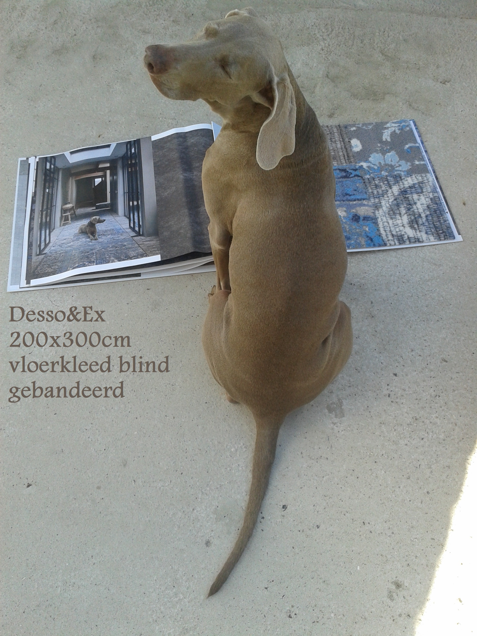 Desso&Ex 200x300 blind gebandeerd